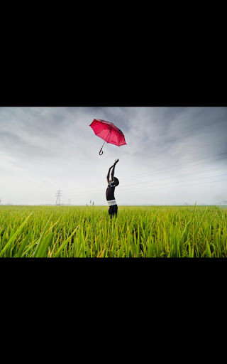 Photos Umbrella live wallpaper