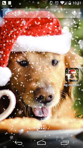 玩個人化App|狗狗圣诞壁纸免費|APP試玩
