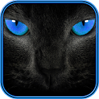 Cat Sounds and Wallpapers icon