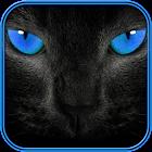 sonidos e imágenes de gatos icon