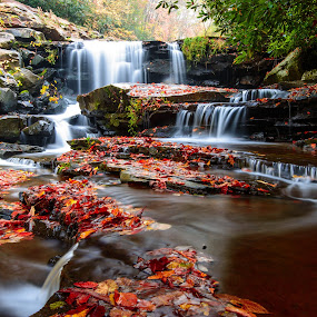 Cascading Flowers by Jim Harmer - Landscapes Waterscapes