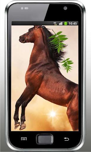 Horses Songs live wallpaper