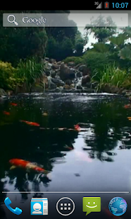 Real pond with Koi