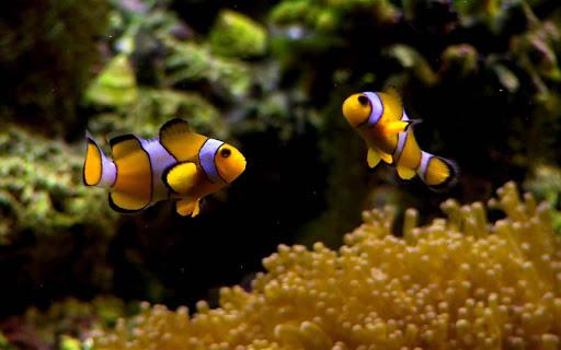 5D Marine Aquarium Theme