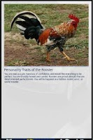 Screenshot of Rooster&Me