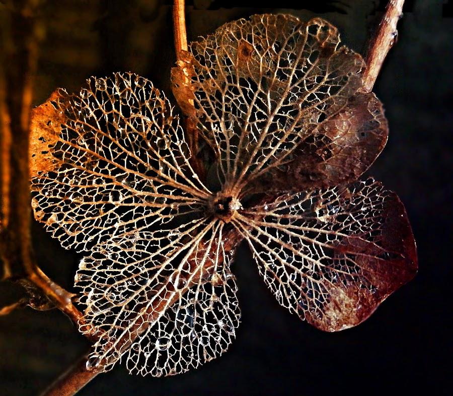 What Shines Shines by Marija Jilek - Nature Up Close Other Natural Objects ( other natural objects, nature, plants, shine, dry petal, hydrangea, branches )