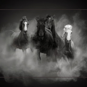 Wild Horse by Mike Ritchie - Animals Horses ( wild, dust, horse, herd, white, four, running, black,  )