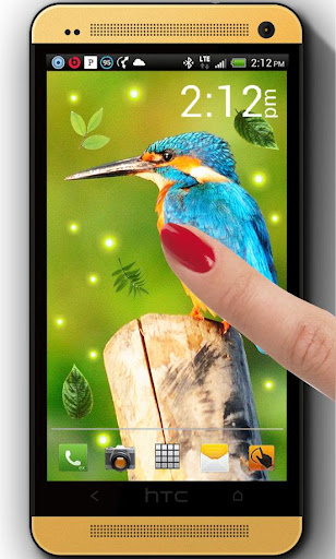 Jungles Birds live wallpaper