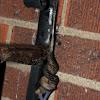 Leopard Slugs mating