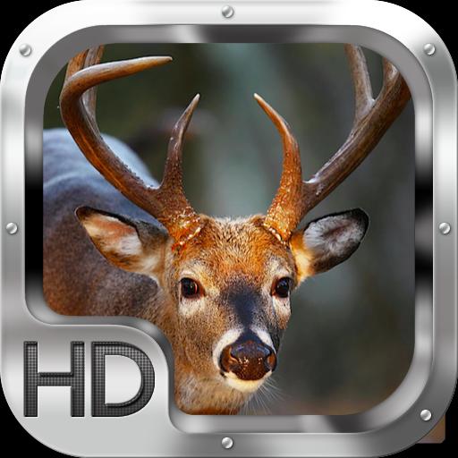 動作必備App Whitetail Deer Adventure LOGO-綠色工廠好玩App