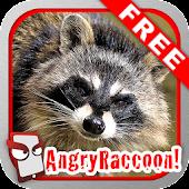 Angry Raccoon Free!