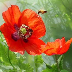 Busy Bea's  by Ilona Stefan - Flowers Flowers in the Wild ( , red, green )