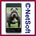 Pit Bull Terrier Wallpapers icon