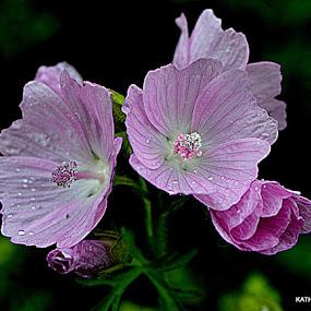 stlte  by Kathelijn Vlaemynck - Flowers Flowers in the Wild