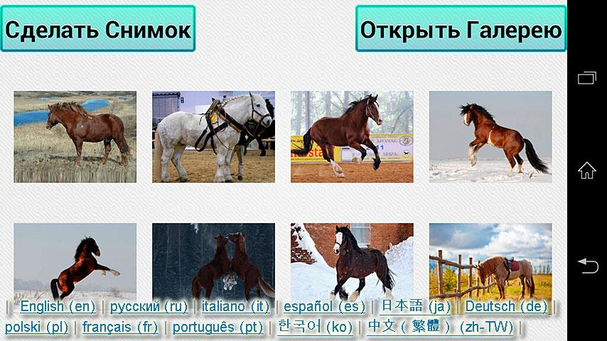 Horses Puzzle & Wallpapers - screenshot