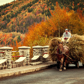 by Bogdan Melinte - Transportation Other