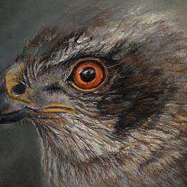 Noble Hawk by Linda Woodward - Drawing All Drawing ( bird, bird of prey., nature, wildlife, hawk )
