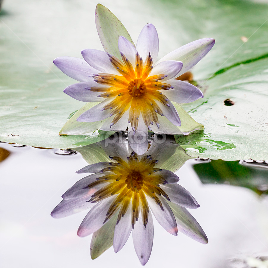 by Yustinus Slamet - Flowers Flowers in the Wild