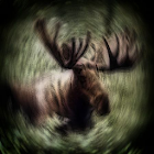 Moose Sound Effects icon