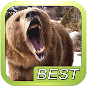 Bear Sound Effect Roar