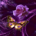Butterfly Rose Live Wallpaper icon