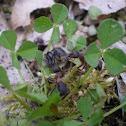 Ants n' bees