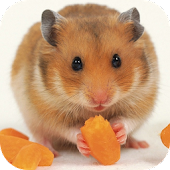 Cute Pet Hamster Free Games