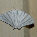 Upside down moth