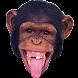 Monkey Memory Test