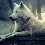 Wolves Water LWP APK icon
