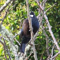 Biodiversity of North Island, New Zealand
