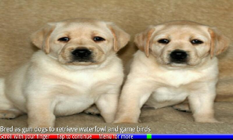 Puppies and Dogs 3 FREE- screenshot