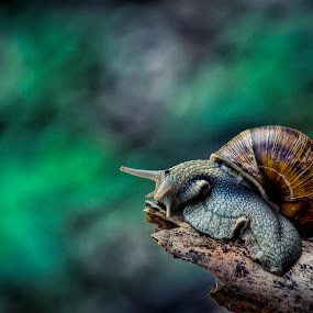 end of the road by Ionel Covariuc - Animals Other ( snail nature macro )