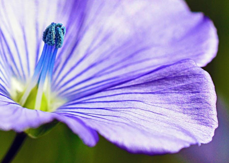 Flower by Jony Ellis - Flowers Single Flower