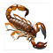 Scorpio - Live Wallpaper 1.1 Apk
