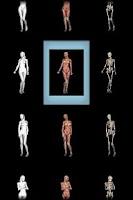 Screenshot of 360° Anatomy for Artists