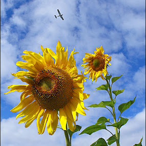 Reach for the Sky by Joseph T Dick - Flowers Flower Gardens