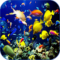 Sea Life Video Wallpapers icon