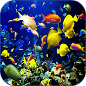 Sea Life Video Wallpapers