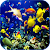 Sea Life Video Wallpapers file APK for Gaming PC/PS3/PS4 Smart TV