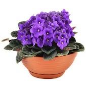 Комнатные растения (Премиум)