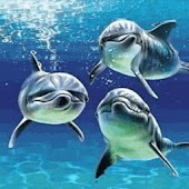Three Cute Dolphins Swimming