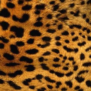 豹紋壁紙 LOGO-APP點子