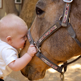 There's also a baby by Matt LaCorte - Animals Horses ( etrocal,  )