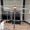 Dragonfly Libelle