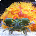 Guide To Salt Water Aquariums icon