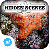 Hidden Scenes Secret Tidepool