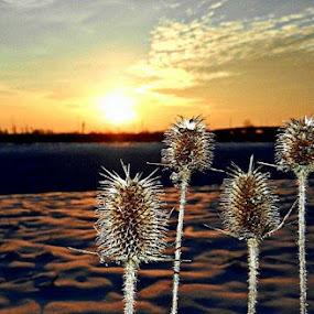Evening Field with Snow by Nat Bolfan-Stosic - Landscapes Sunsets & Sunrises ( field, sunset, snow, plants, evening )