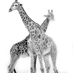 Giraffe by Paul Murray - Drawing All Drawing ( pencil, graphite, giraffe, wildlife, drawing )