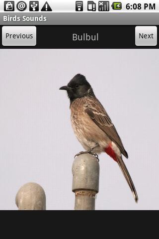 Free Birds Sounds- screenshot